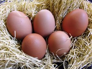 201003_egg_2039_w800